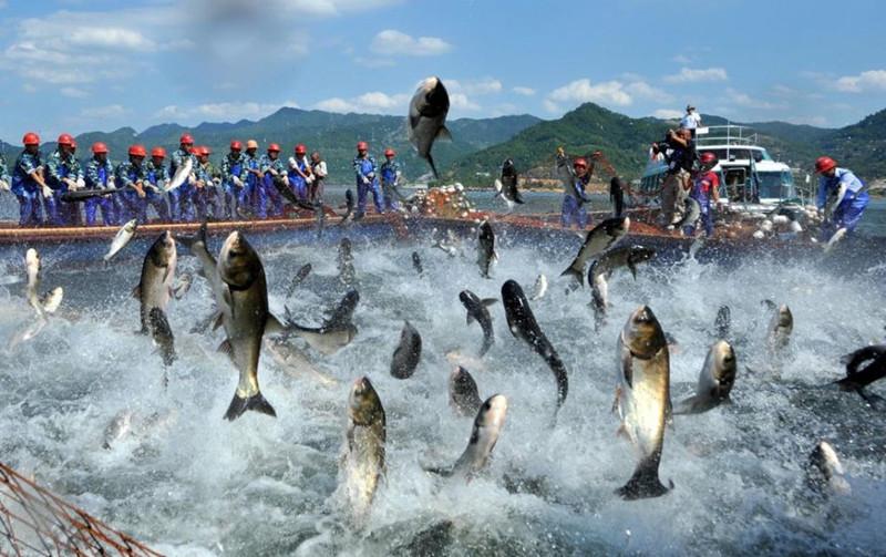 千岛湖中心湖区景区大门票船票套票团购梅峰岛旅游行